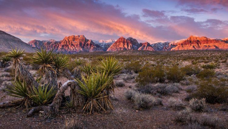 Nevada, Emsal Karar İle CS:GO Espor Bahislerini Onayladı